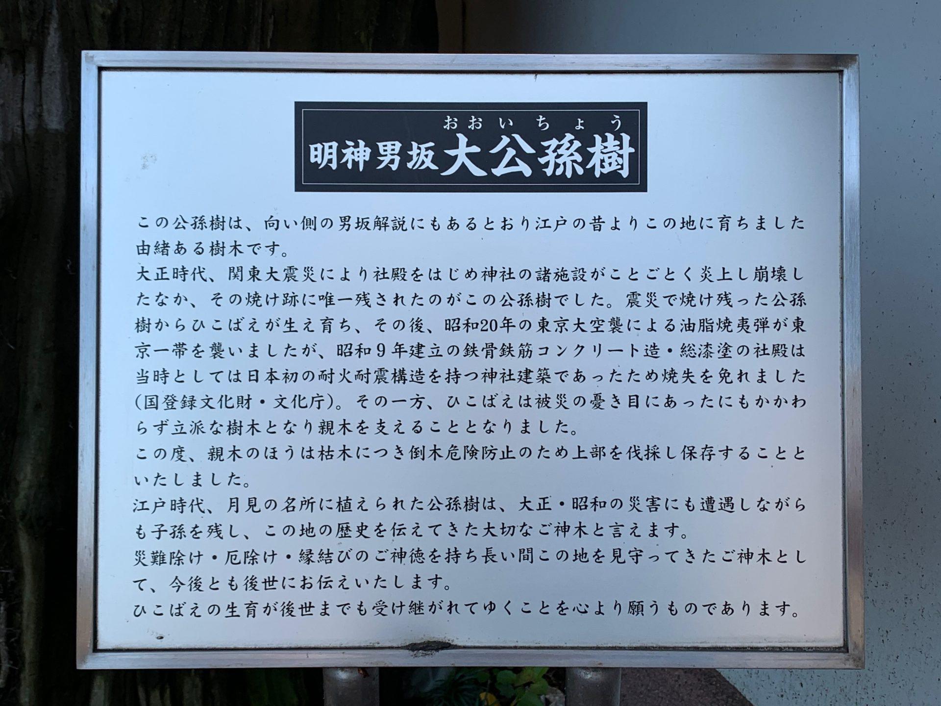 明神男坂大公孫樹の案内