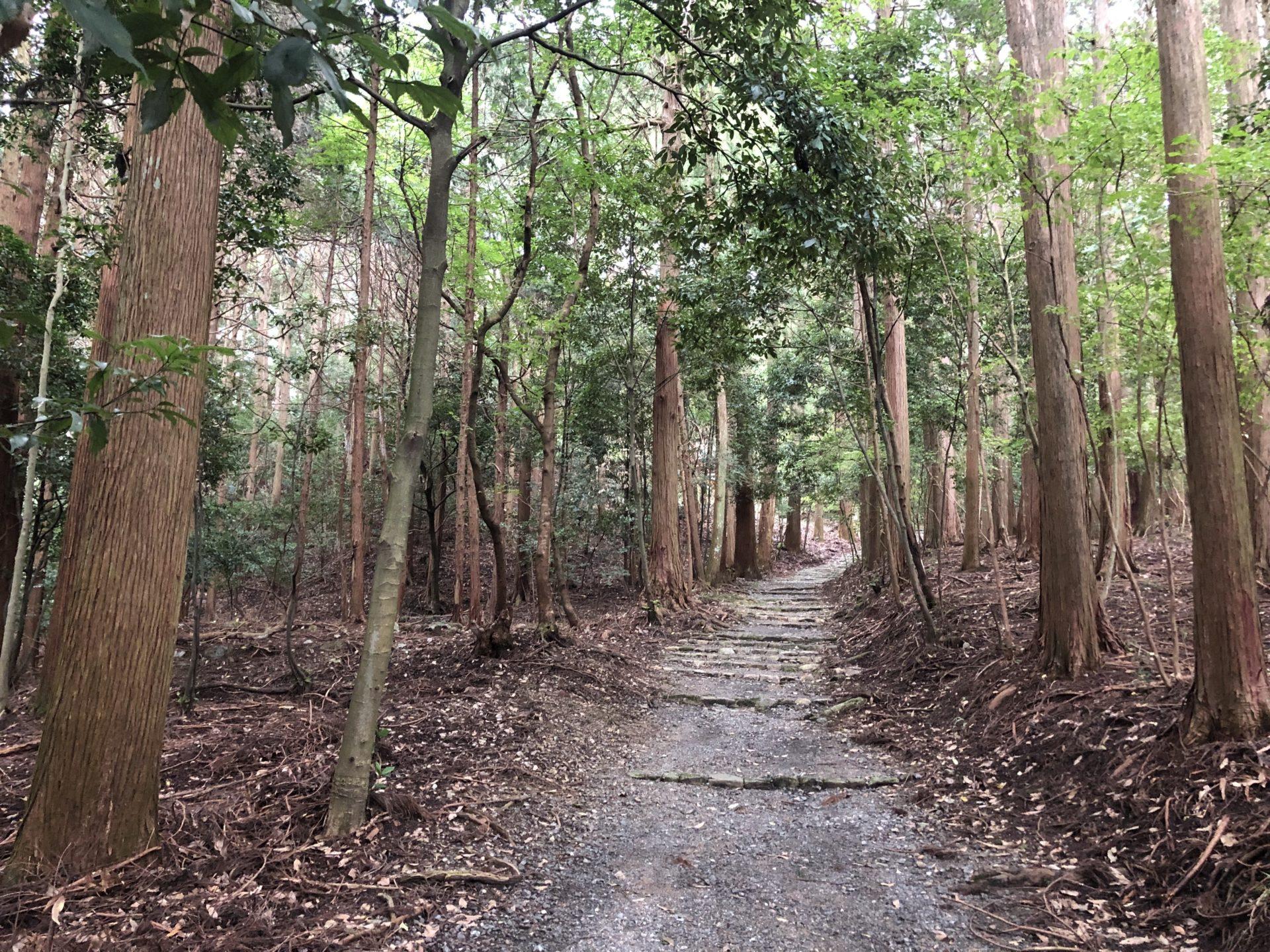御蔭神社の参道