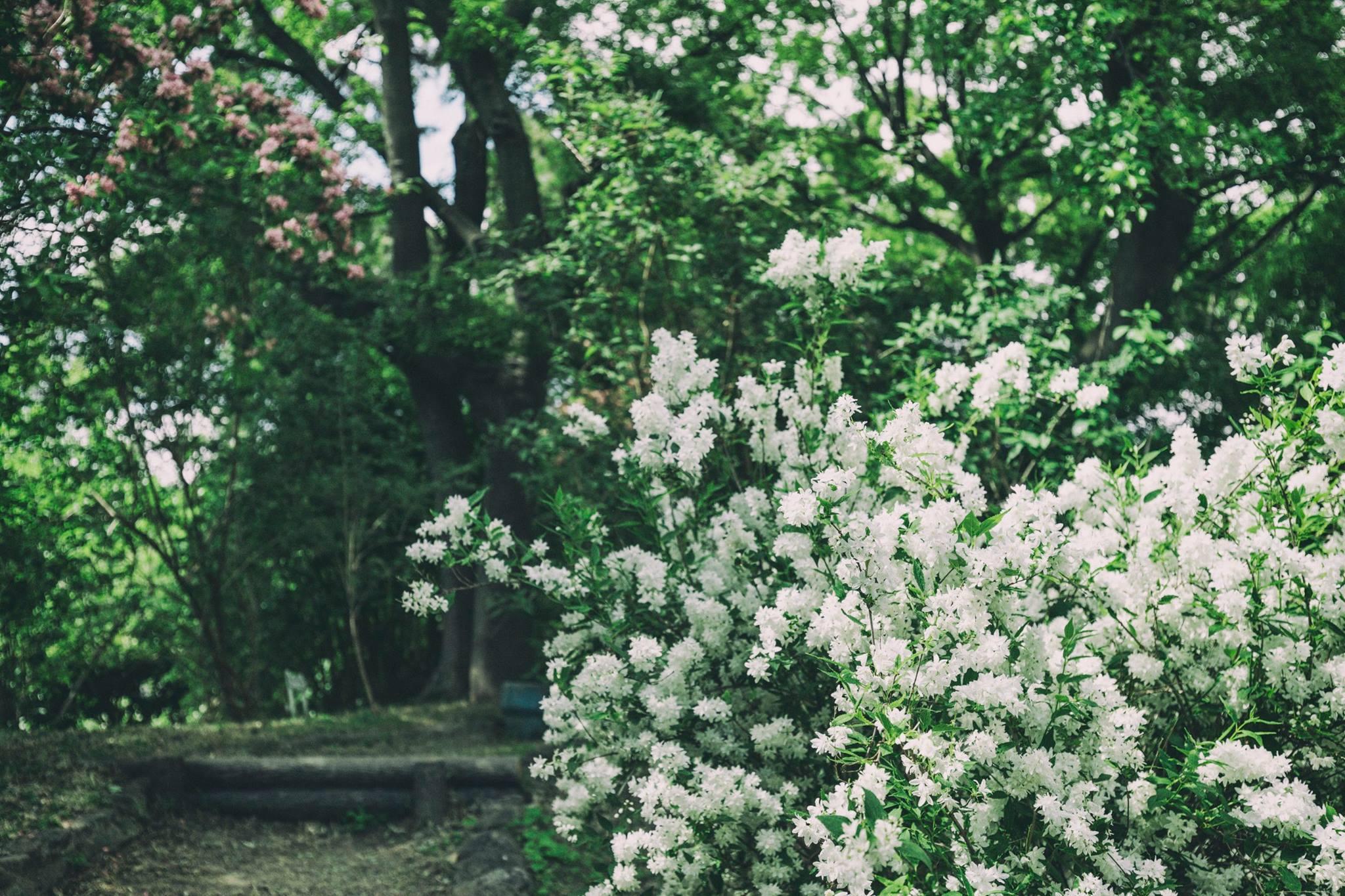 住吉大社の卯の花苑